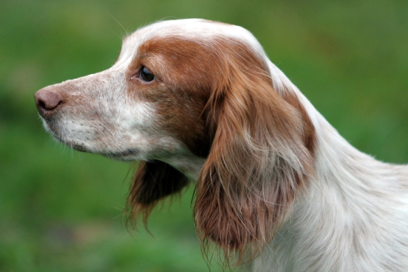 WWS Dogs_IMG_7704