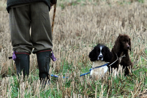 WWS Dogs_IMG_7708