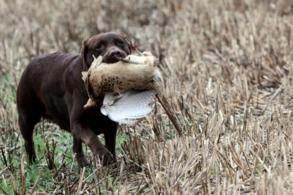 WWS Dogs_IMG_7726