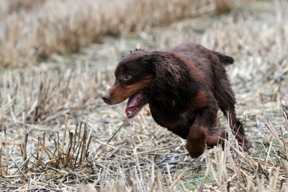 WWS Dogs_IMG_7770