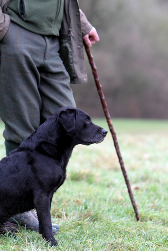 WWS Dogs_IMG_7829