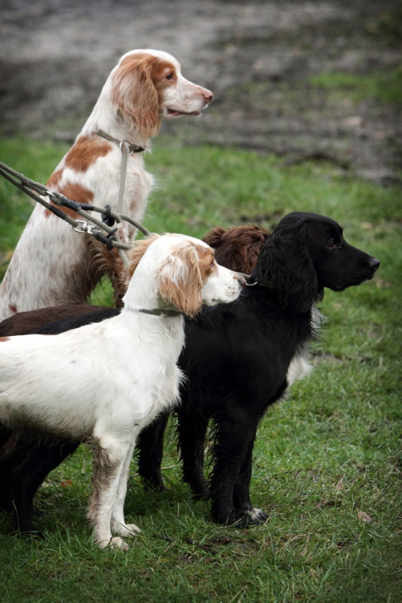 WWS Dogs_IMG_7886