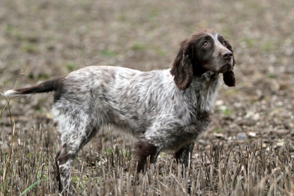 WWS Dogs_IMG_7944