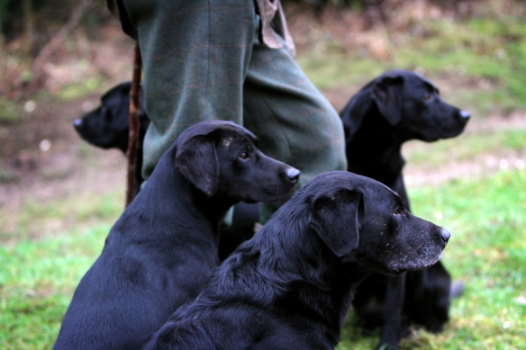 WWS Dogs_IMG_7947
