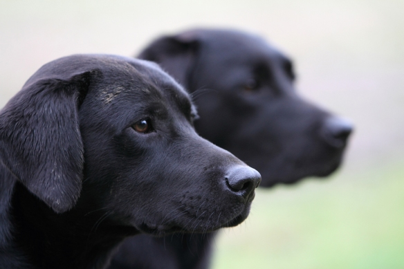 WWS Dogs_IMG_7993