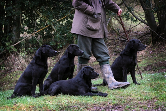 WWS Dogs_IMG_8008