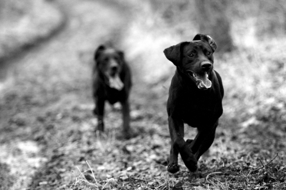 WWS Dogs_IMG_8048
